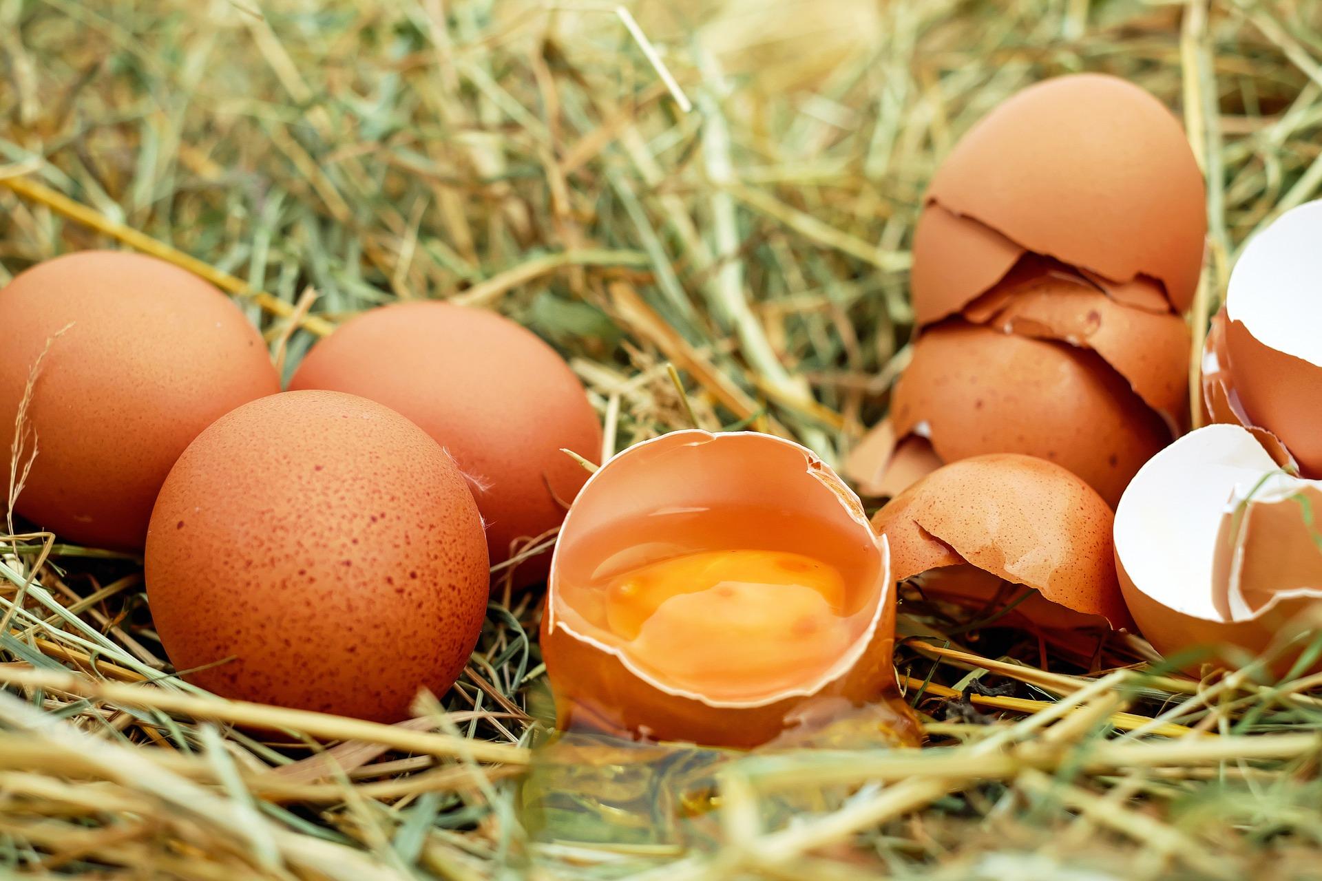 Što sve treba znati o jajima