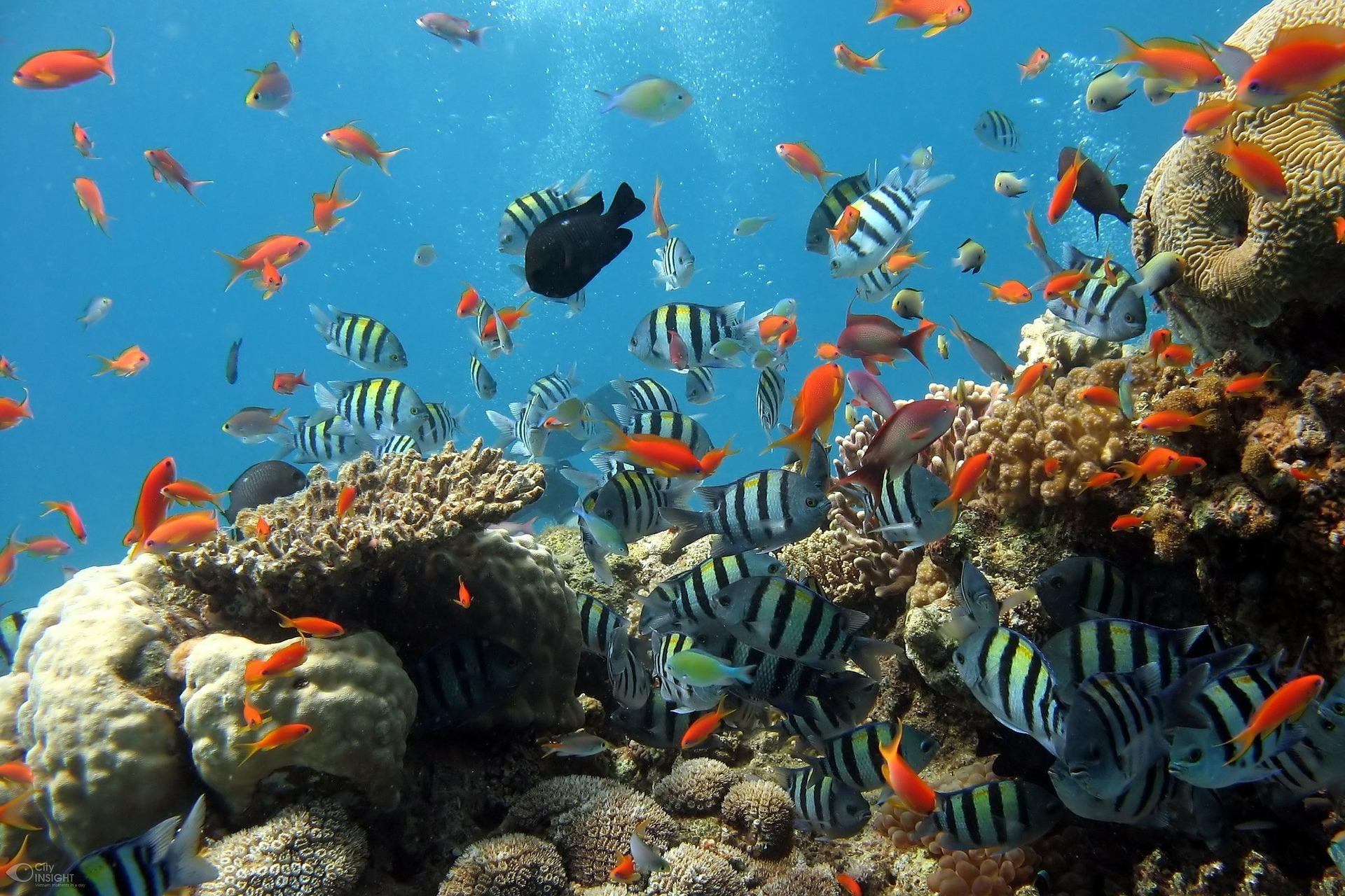 Od 2009. do 2018. nestalo 14 posto koraljnih grebena u svijetu